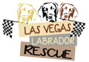 labradorRescue_1